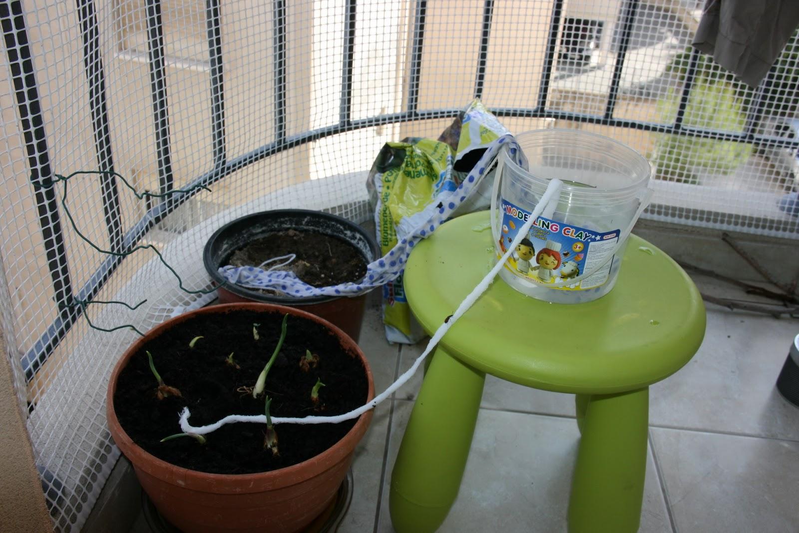 Чтобы поливать цветы во время отпуска ленточным способом, возьмите большую емкость с водой. Растения «выпьют» такое количество воды, которое им будет необходимо