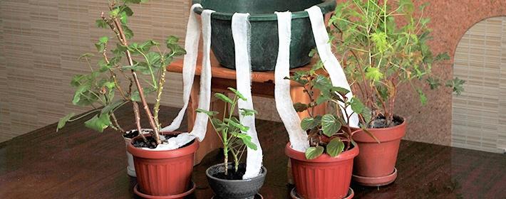 Капельный полив можно сделать самим: нужно повыше поставить емкость с водой, опустить туда край скрученного бинта (шнурка, веревки), другой конец закрепить в грунте с растением