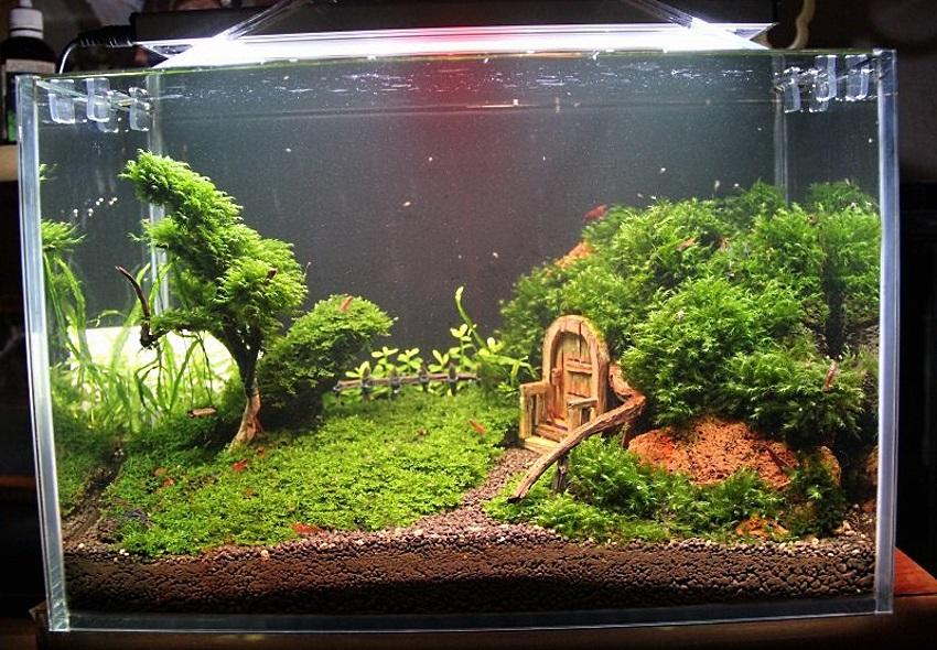 Такой аквариум испаряет 3–5 литров в неделю. Это естественное увлажнение квартиры