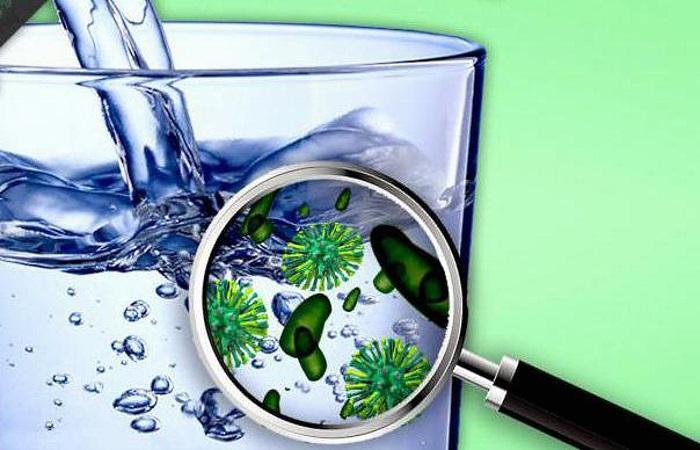 Основная причина увядания растений в вазе — недостаток питания и бактерии, живущие в воде