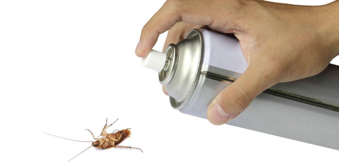 Борьба химическими средствами поможет избавиться от постельных клопов