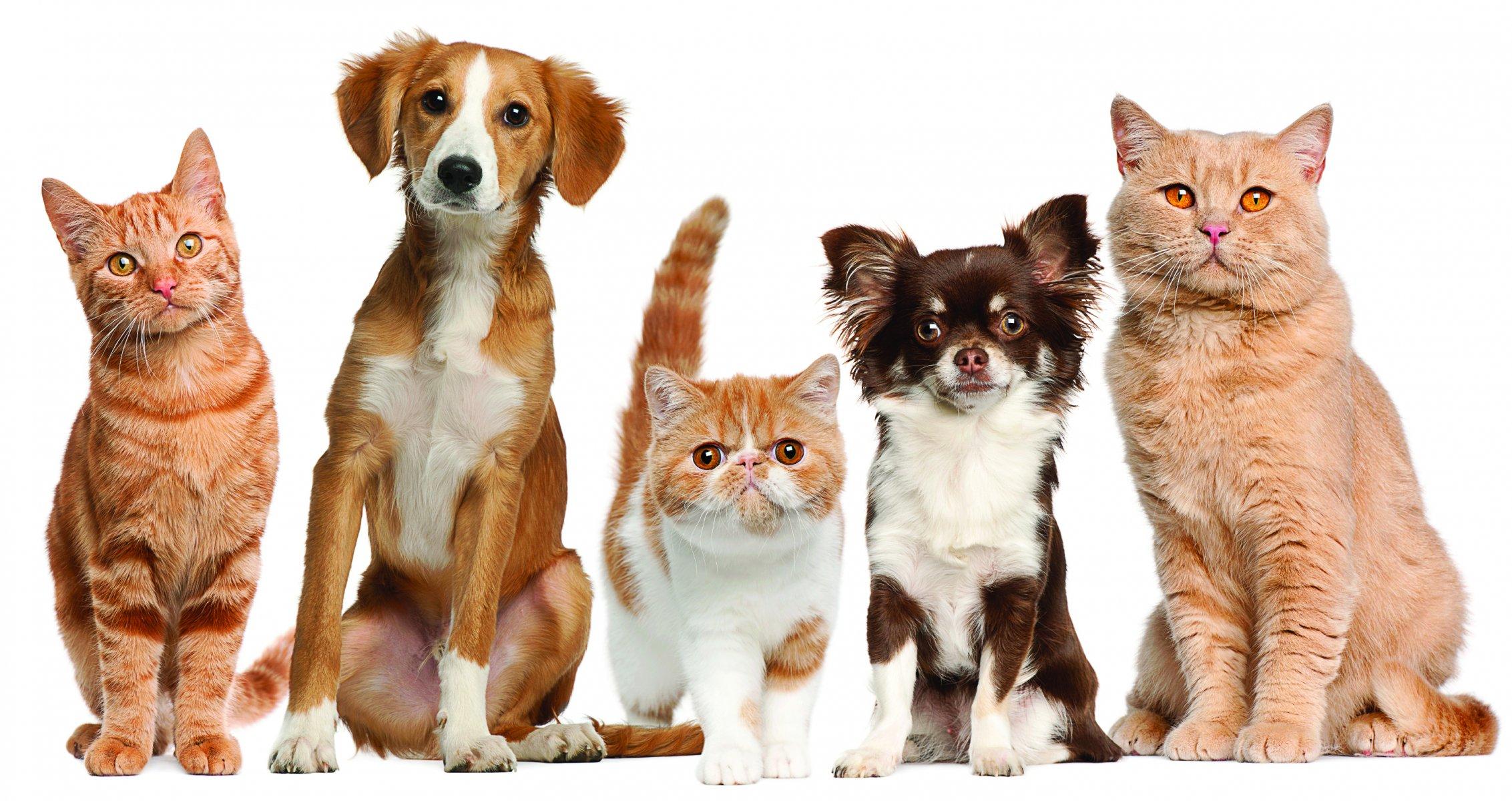 """Домашние животные не подвержены нападкам со стороны клопов. Фото: <a title=""""w-dog.ru"""">w-dog.ru</a>"""