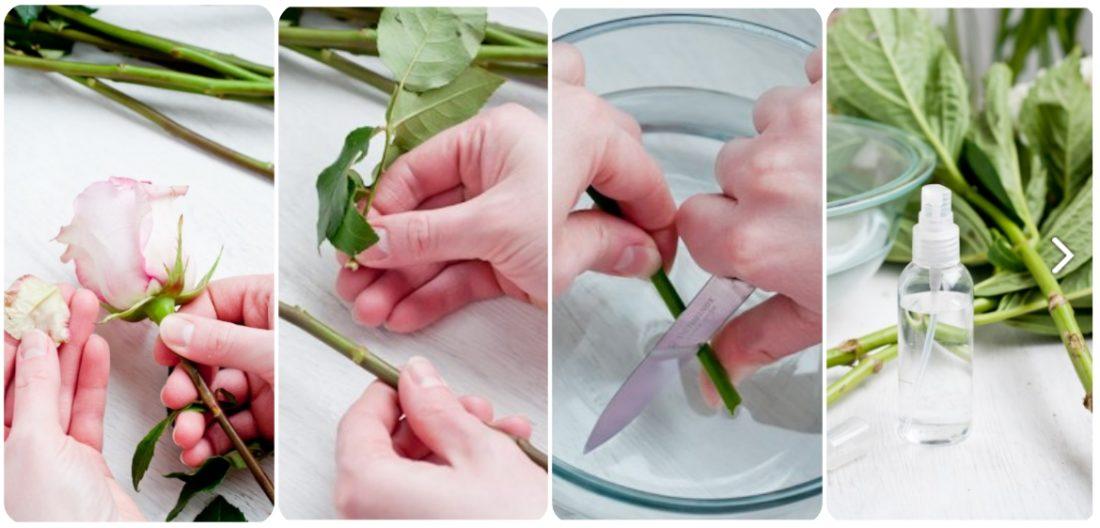 Ежедневно меняйте воду, срезайте стебли, обрывайте старые листья и лепестки