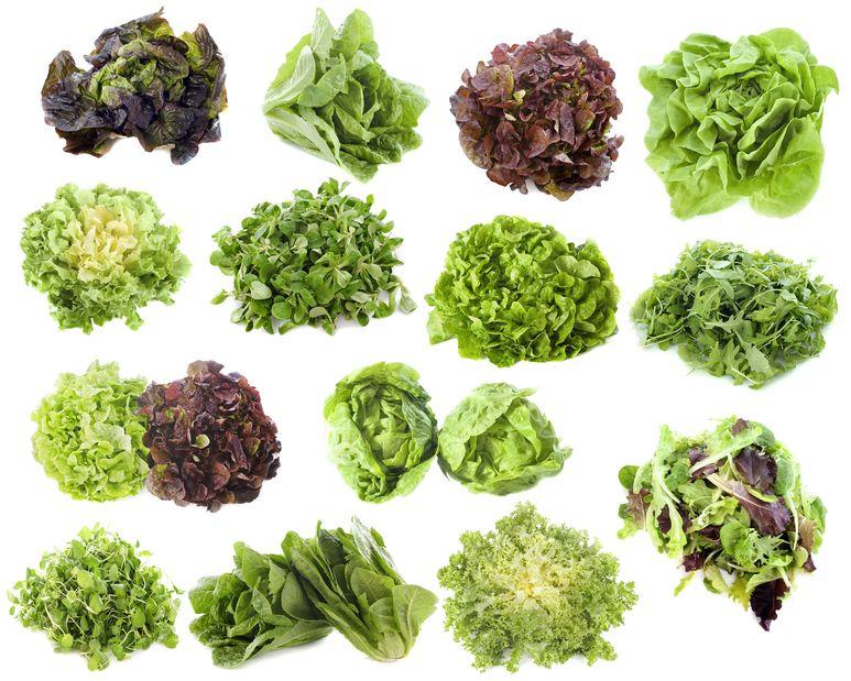 Как сохранить листья салата на зиму