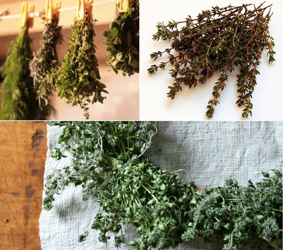 Сушить растение можно в подвешенном состоянии или на тканевом/бумажном полотне горизонтально