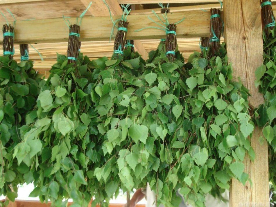 Правильно сушить березу — парным подвешиванием, длина соединительной верёвки 30–40 см