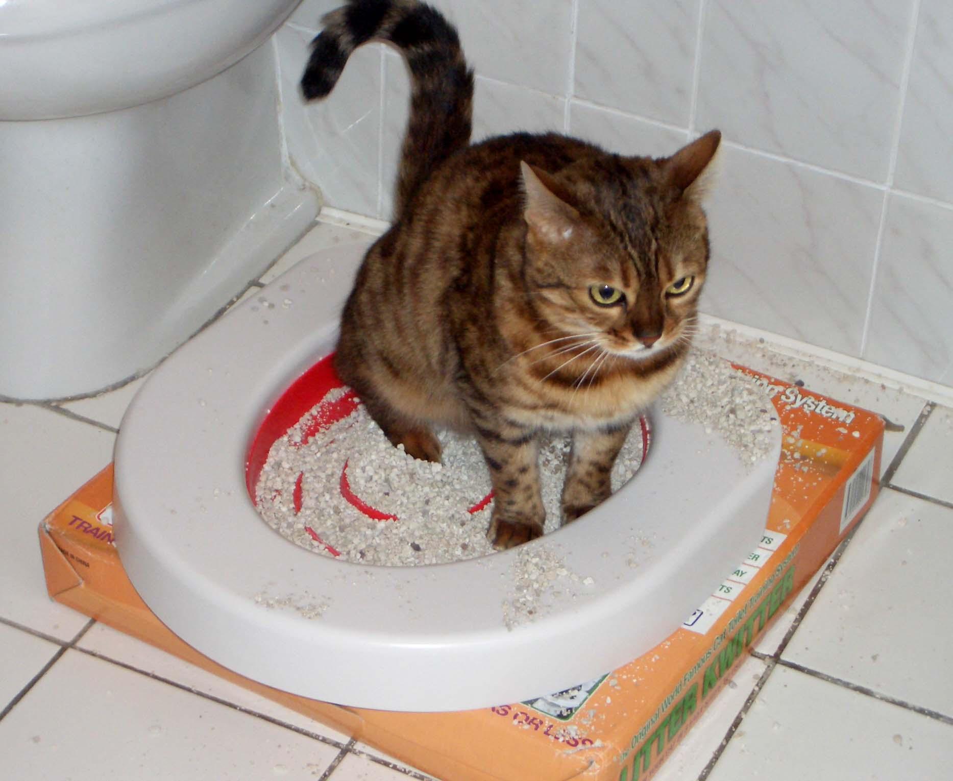 На фото видно, что лоток подобран неверно: 1) животное должно свободно поворачиваться в нем; 2) высокие бортики не дадут наполнителю высыпаться за пределы емкости.