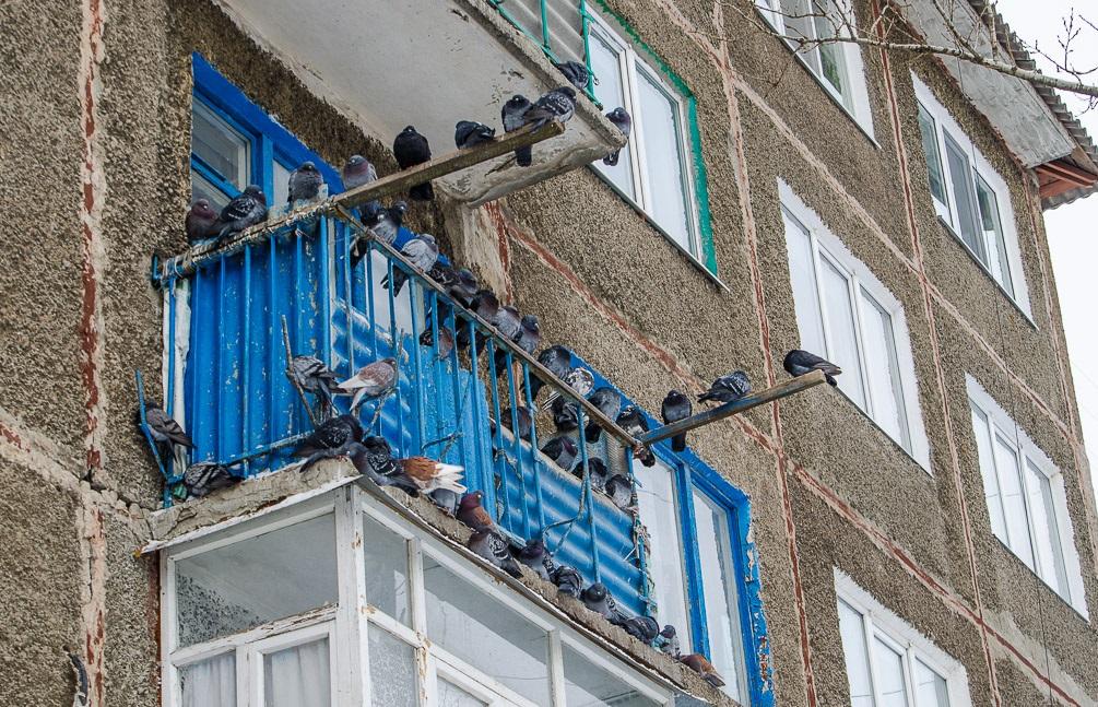 Если не угощать птиц в холодное время года, то они не привыкнут к вашему гостеприимству