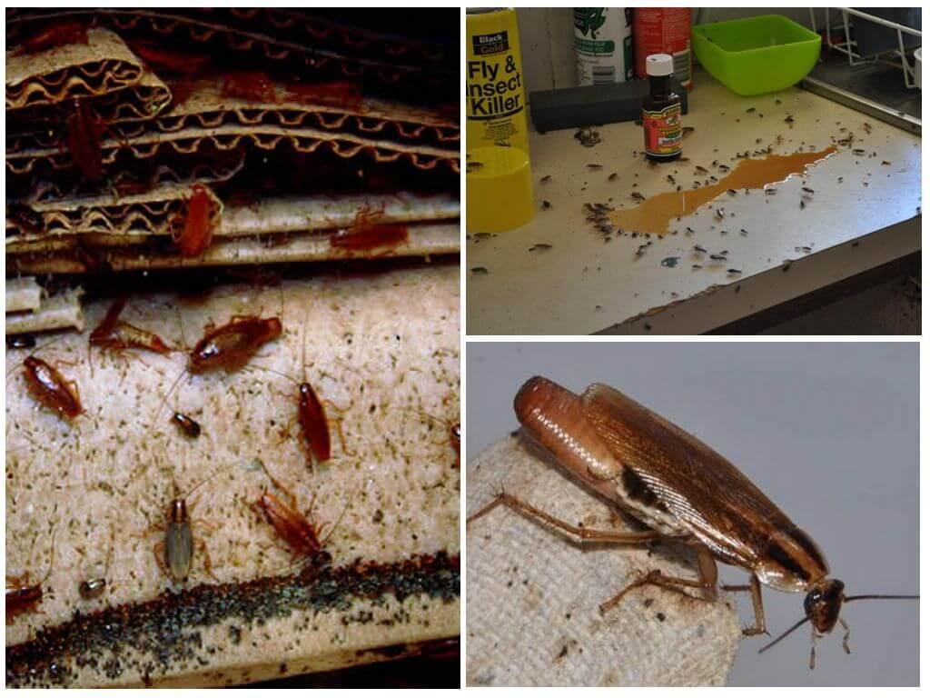 Регулярно выносите мусор, его скопление — отличная среда для паразитов