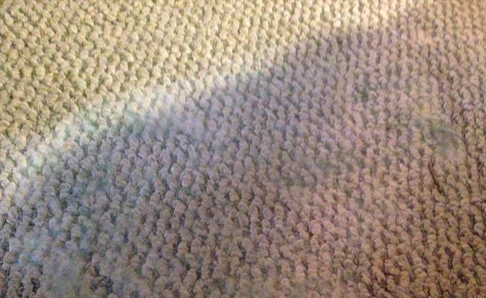 Если после чистки не до конца высушить ковер, появится запах плесени, которая быстро развивается во влажных условиях