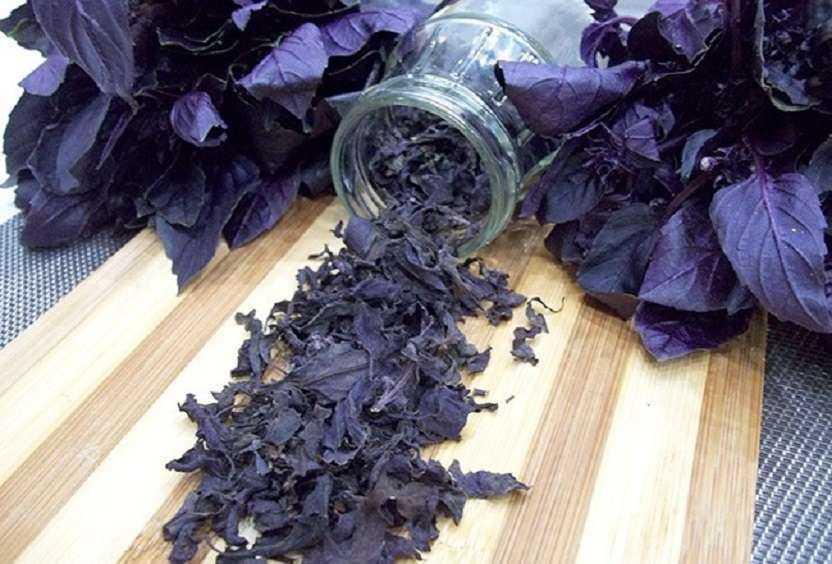 Хранить сушеный базилик надо отдельно от других трав, чтобы они не втягивали запахи