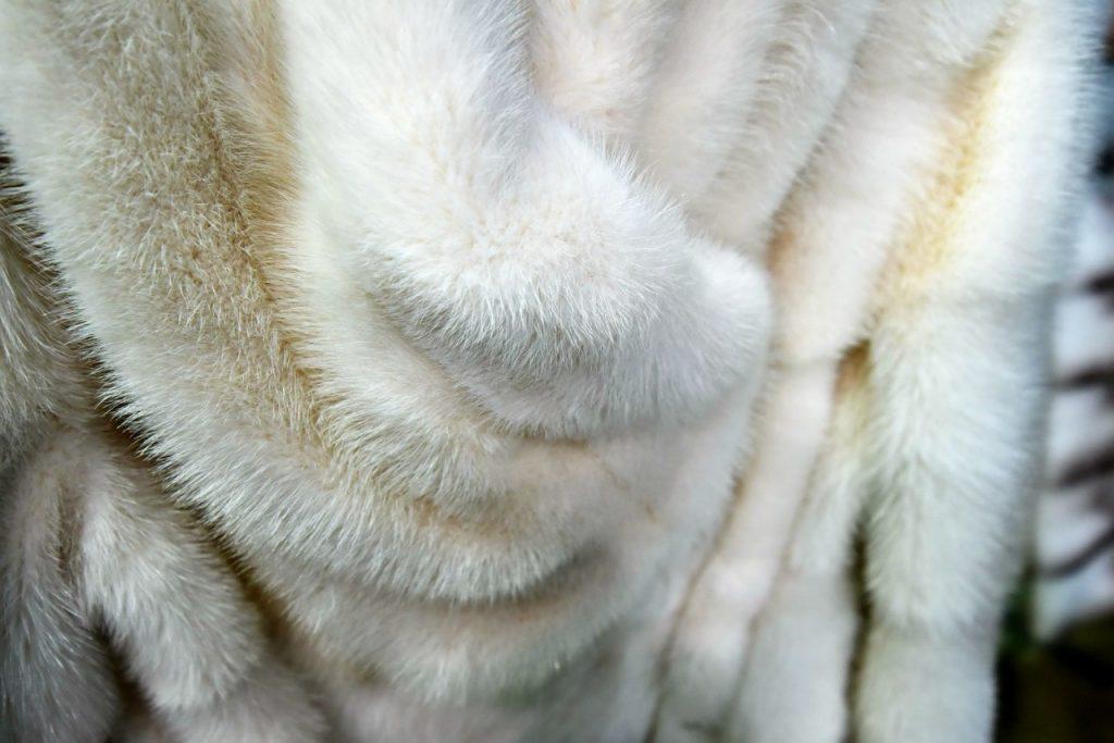 Желтизна на мехе появляется, если вещь повесить на хранение непросушенной или при неправильном уходе