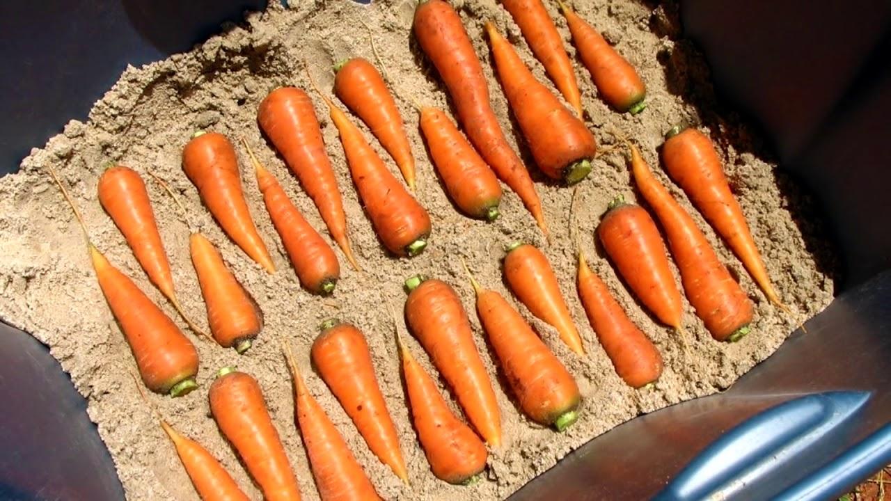 При укладывании моркови исключите соприкосновение, выдерживайте интервал — не меньше 1 см.