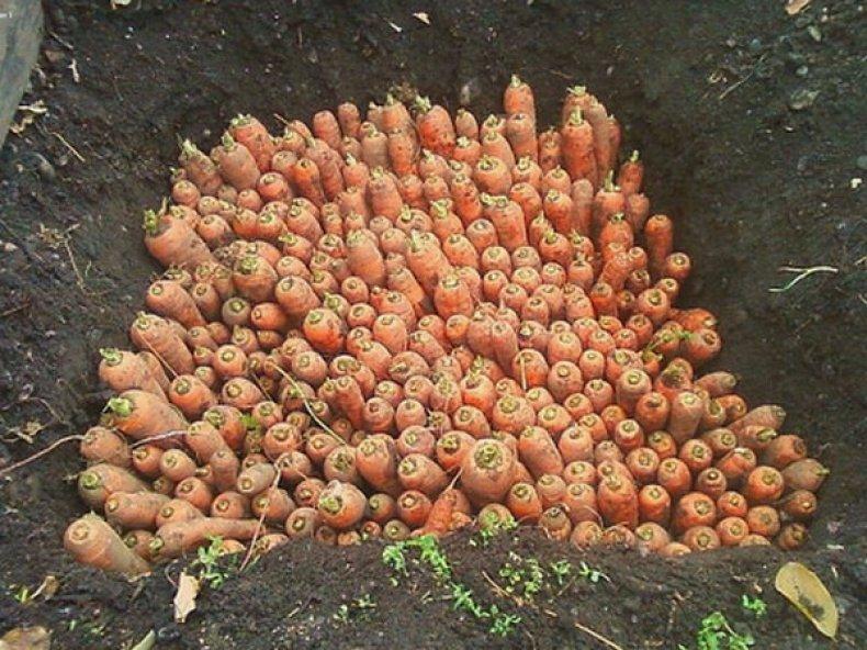 Для укрытия моркови можно использовать старый полиэтилен: плёнка с грядок и теплиц или полиэтиленовые мешки для мусора.