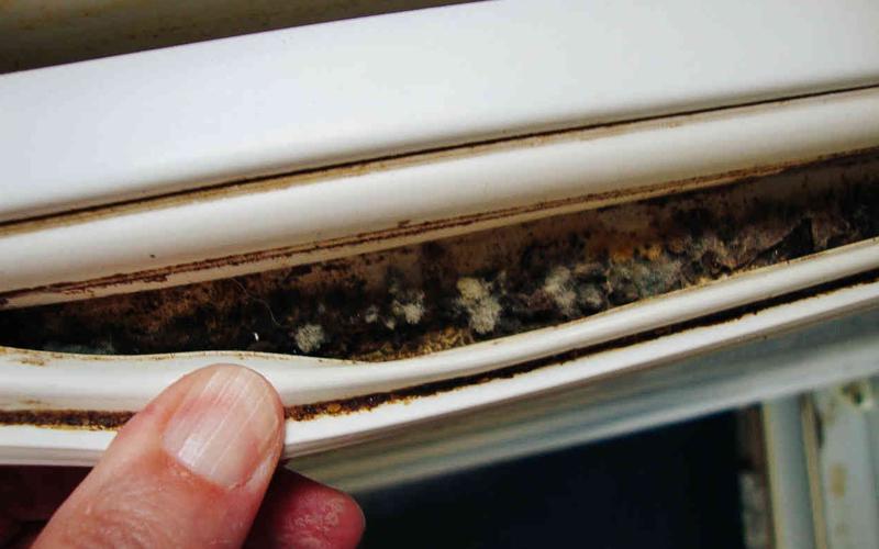 Опасна — черная плесень (Aspergillus niger). Именно ее споры вызывают многие болезни