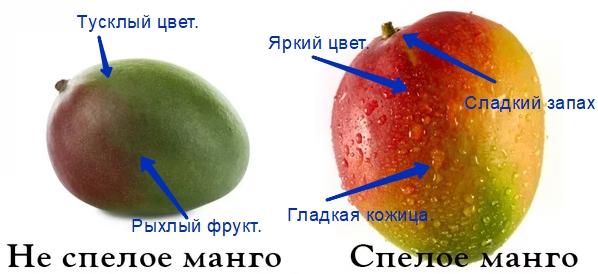 Если вы планируете держать фрукт более 10 дней, то лучше взять слегка недозревший плод, так вы увеличите срок хранения манго