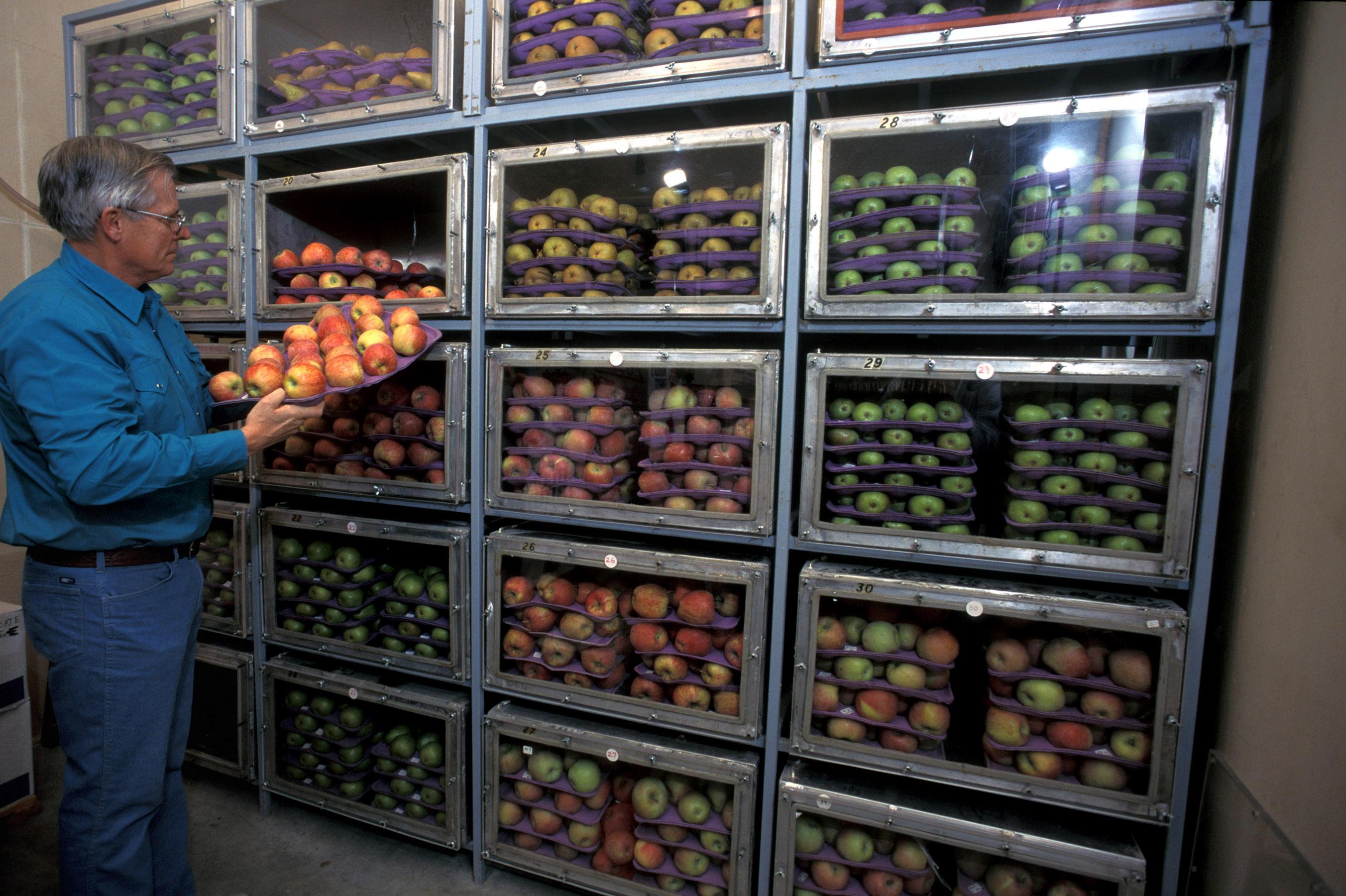 Регулярно проверять условия хранения овощей и фруктов. При необходимости выбрасывать те плоды, которые изменили плотность, цвет или испортились