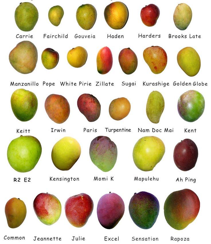 Есть сорта разных размеров и цвета, поэтому зелёное манго — не всегда означает, что плод недозревший.