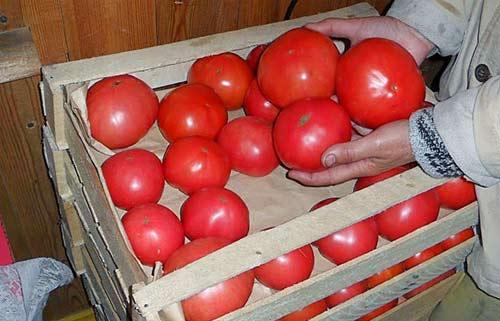 Верхний слой прикройте бумагой, чтобы на помидоры не попадал свет