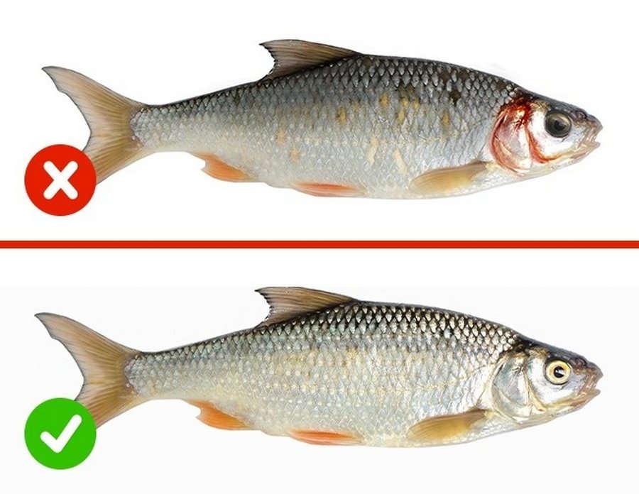 Несвежая рыба опасна для здоровья