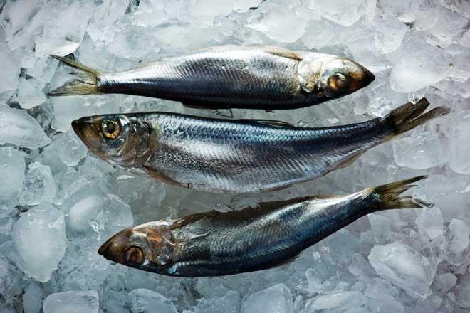 Если рыбу положить на лед, можно продлить срок ее годности до 2 дней