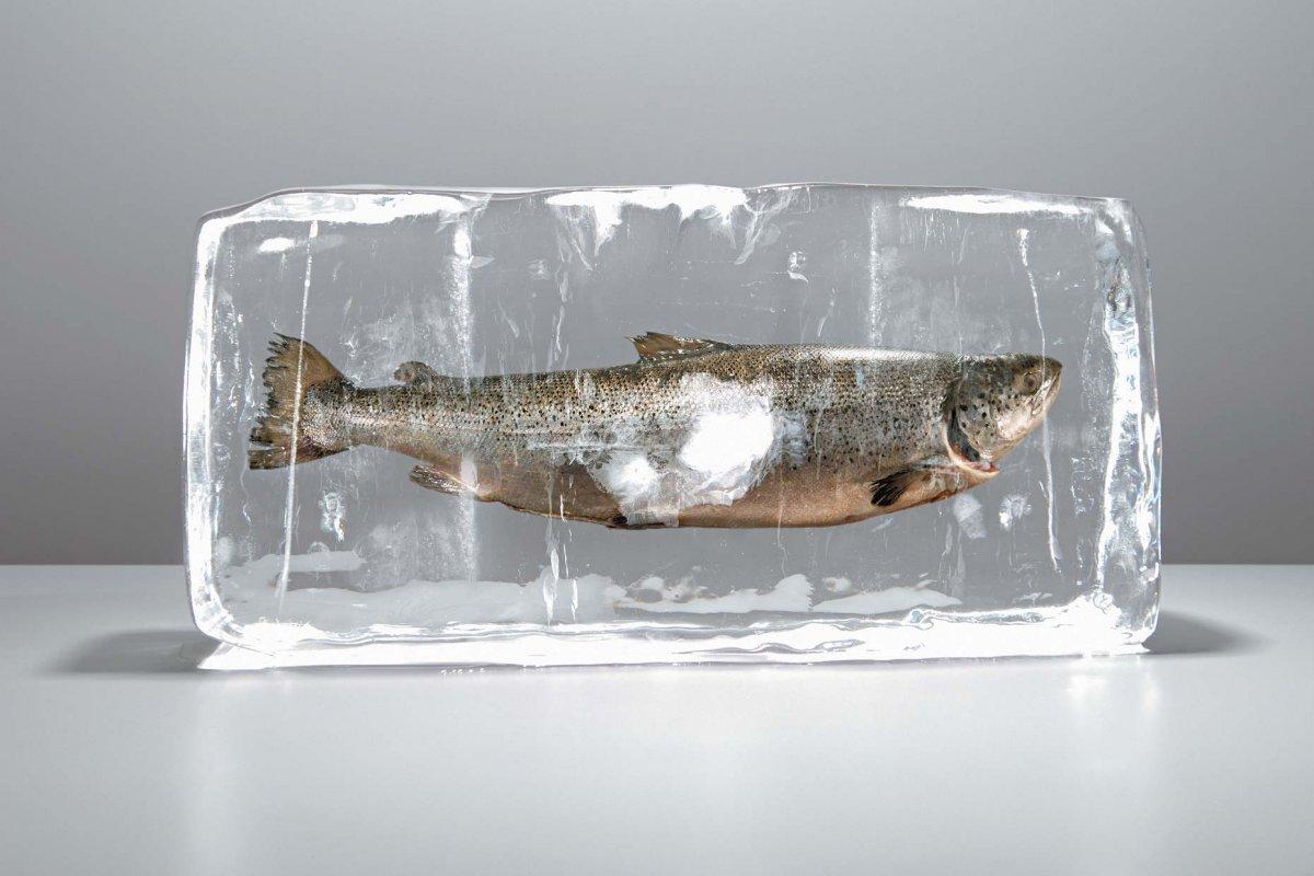 Максимальный срок хранения любой замороженной рыбы — 1 год